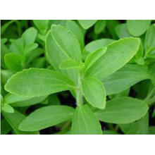 GMP Standard Ingredientes Farmacêuticos Stevia Leaf Extracts 90% Min. HPLC
