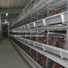 Best Price Automatic Layer Chicken Cage