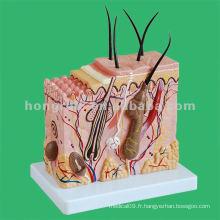Modèle de blocs de peau humaine, modèle d'éducation