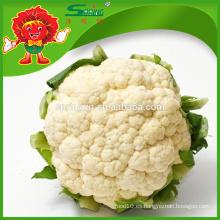 La mejor coliflor blanca La coliflor fresca a granel