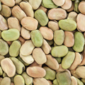 New Crop Best Price of The Broad Beans