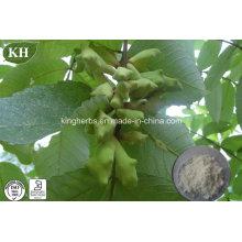 Extracto de Gall de la fuente de la fábrica / extracto de Rhus Chinensis Ácido tánico 40% - 99%;