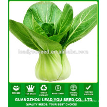 NPK06 Qinggu Gute Qualität Pak Choi Samen Fabrik für den Anbau