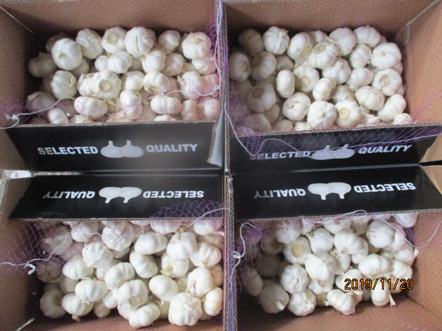 Best Quality 2019 Pure White Garlic