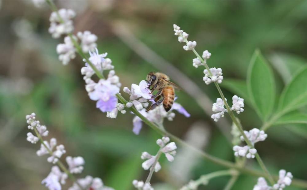 2020 New Crop Pure Vitex Honey para el mercado mundial