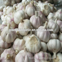 china red garlic for sale