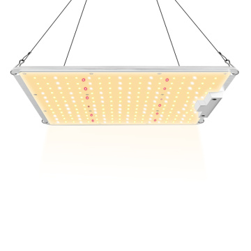 Intérieur 200w Grow Light Factory