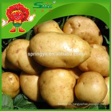 Patata china fresca nueva cosecha 2015