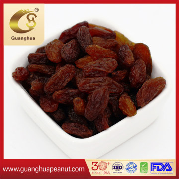 Hot Selling Green Raisin with Export High Quality