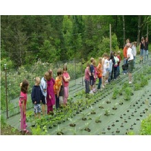 Anti-weed Textile Ground Cover Net