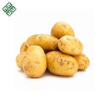 Frische Kartoffel der neuen Ernte 2018