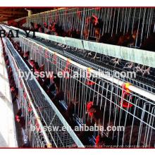Equipamentos agrícolas de aves de capoeira para a camada de criador de camadas Frango