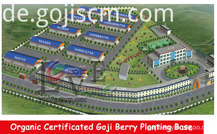 Factory Price Organic Goji Berry manufacturer