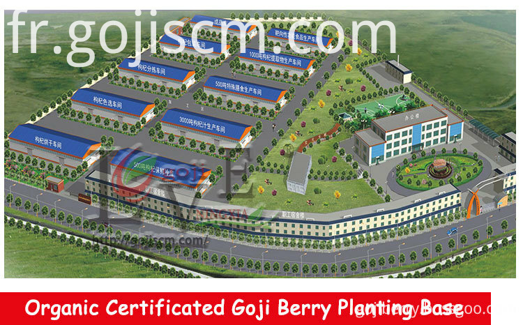 Goji Berry Vitamins manufacturer
