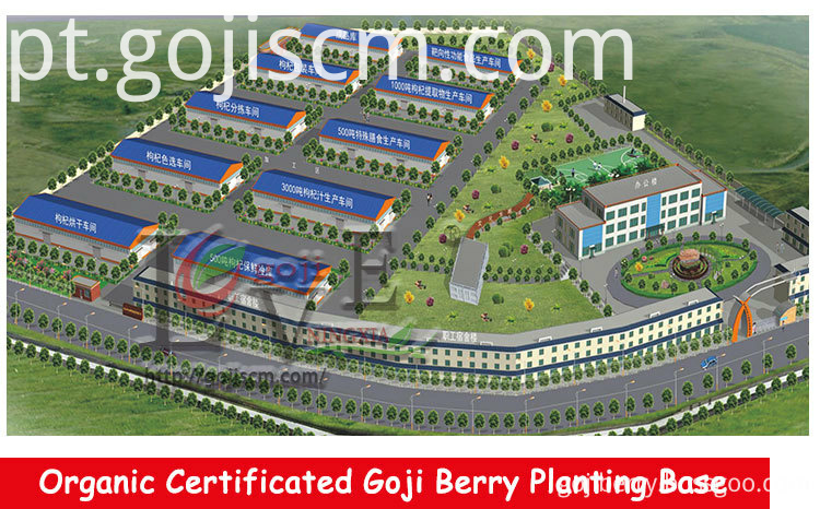 EU Certificate Organic Goji Berry supplier