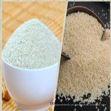 Sementes de milheto branco para sementes de pássaros ou consumo humano