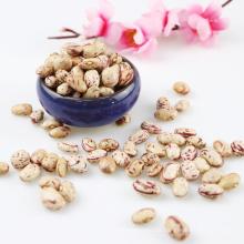 GUT POLIERTE Xinjiang Runde Art Licht Speckled Kidney Bohnen Cranberries Bohnen aus China