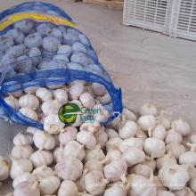 Preço por atacado de alho na China