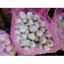 Super Grade White Garlic