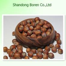 Venta de Chestnut Venta caliente de China