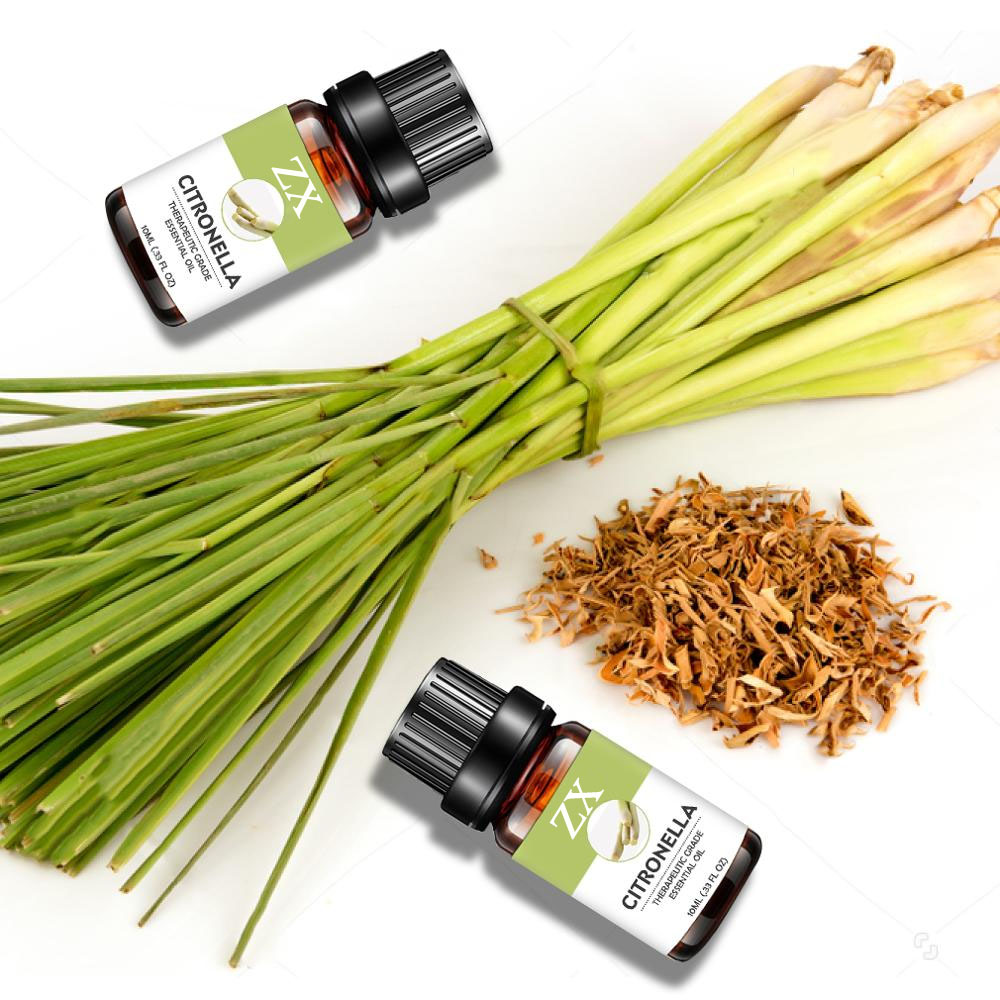 citronella oil bulk
