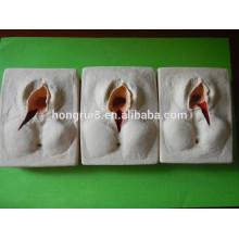 ISO 3 pcs em 1Set- Vulva Suturing Practice Model, Episiorrhaphy Trainer