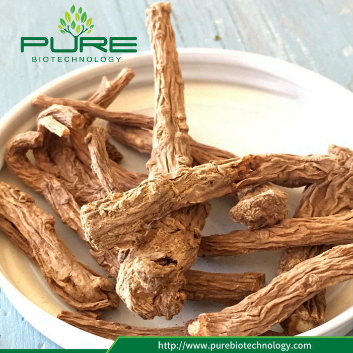 Dried Angelica Sinensis Root For Wholesales (4)
