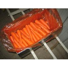 Chino buena calidad zanahoria