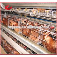 África do Sul Distribuidor Equipamento Agrícola Layer Cage