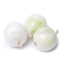 Hot sale & hot cake high quality White Fresh Onions with reasonable price and fast delivery !!