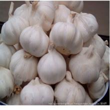 Nova colheita Jinxiang alho fresco com pele branca, alho branco puro