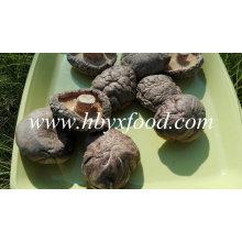 Wholesale Dried Vegetable Smooth Shiitake Mushroom