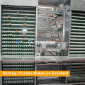 Automatic Chicken Egg Poultry Farm Egg Collecting Machine
