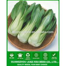 NPK01 Mande Hybrid chinesische Pak Choi Samen, Xiaobaicai Samen