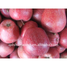 Red delicious huaniu apple