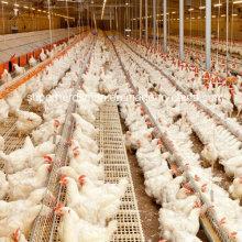 Équipement de ferme avicole de haute qualité pour le poulet d'éleveur