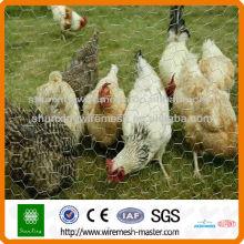 Redação pesadamente hexagonal da galinha