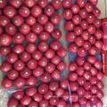 Shandong Fuji apple five layers blush fuji apple juicy apple