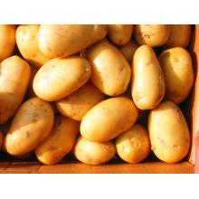 80-150 Top Quality Golden Fresh Potato