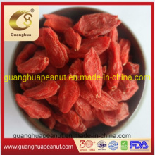 Plump Goji Berries From Ningxia with Natural Nutrition