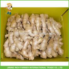 Precio de mercado bajo para el granjero de la exportación El jengibre chino fresco jengibre 150g, 250g y para arriba