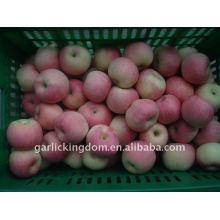 Venda 2011 shanxi fuji apple