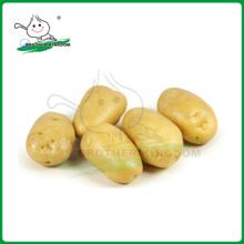 Holland Seed Potato /chinese fresh potatoes /Fresh Potato