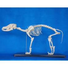 Hochwertiges Tierhundeskelettmodell für Biologielehre (R190112)