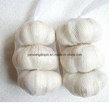 Chinese Normal White Garlic, Pure White Garlic Price