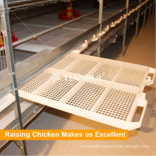 Best Price Well Designed Poultry Broiler Automatic Equipment