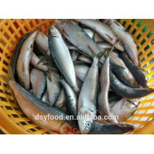 Poisson de fruits de mer de sardine en gros congelé