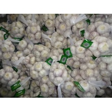 Hot Sale Normal Knoblauch 2020