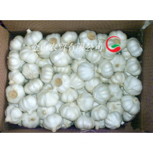 2015 Fresh Pure White Garlic