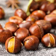 Productos agrícolas al por mayor nueces naturales de castaña china
